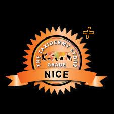 Nice +