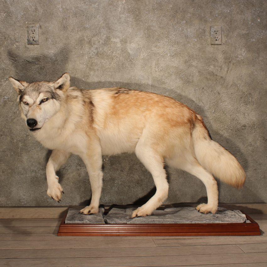 h--owling (Wolf!France AU) - DeviantArt