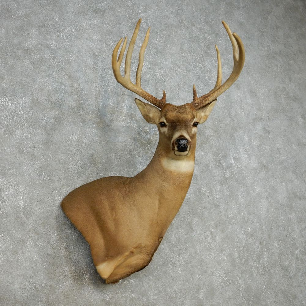 The Gallery For Gt Mounted Deer Head For Sale