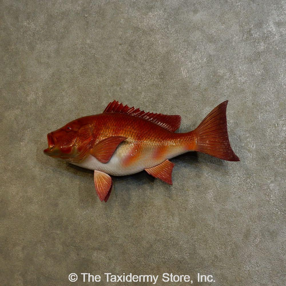 16535 e 31 red snapper replica taxidermy fish mount for How to taxidermy a fish