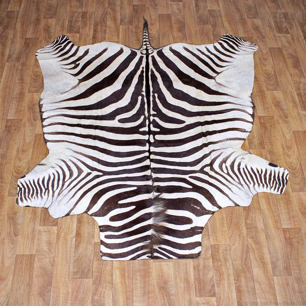 African Burchell's Zebra Rug Taxidermy Mount