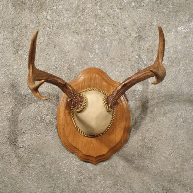 Black-tailed Deer Taxidermy Antler Plaque Mount