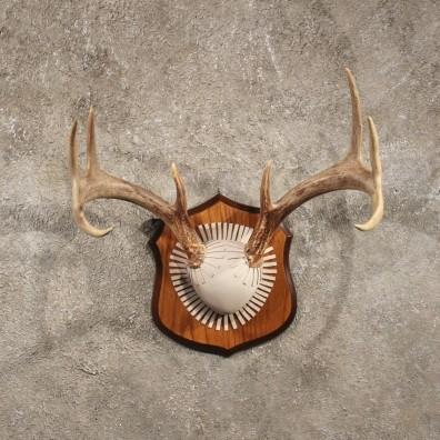 Whitetail deer antler plaque mount for sale