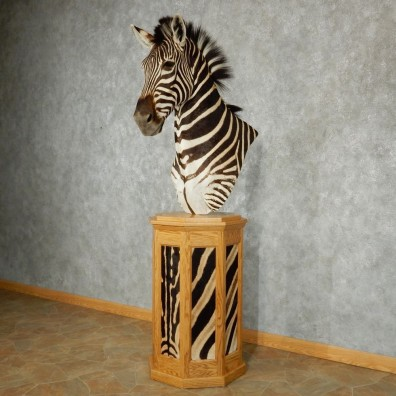 African Zebra Pedestal Taxidermy Mount #13242 For Sale @ The Taxidermy Store