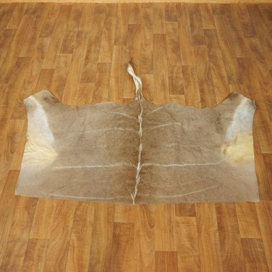 Greater Kudu Hide Taxidermy Skin #17456 For Sale @ The Taxidermy Store