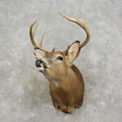 Whitetail Deer Shoulder Mount For Sale #17474 @ The Taxidermy Store