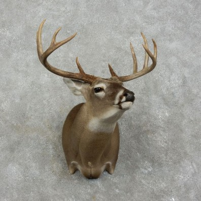 Whitetail Deer Shoulder Mount For Sale #17515 @ The Taxidermy Store
