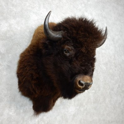 American Buffalo Shoulder Mount For Sale #17766 @ The Taxidermy Store