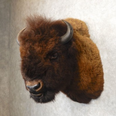 American Bison Shoulder Mount For Sale #21274 @ The Taxidermy Store