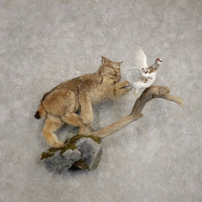 Alaskan Lynx & Ptarmigan Life-Size Taxidermy Mount For Sale #20484 @ The Taxidermy Store