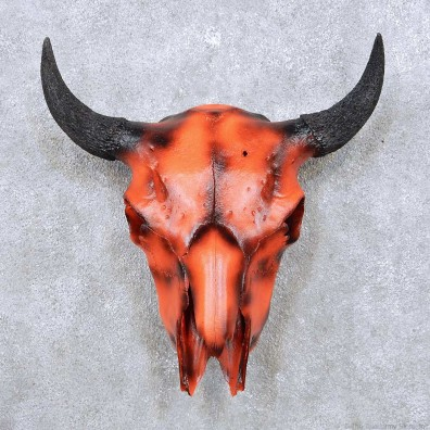American bison skull
