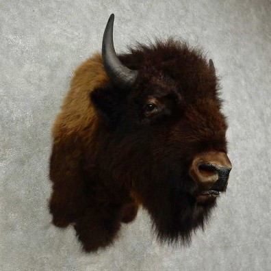 American Buffalo Shoulder Mount For Sale #16945 @ The Taxidermy Store