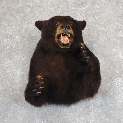 Black Bear 1/2-Life-Size Mount For Sale #19624 @ The Taxidermy Store