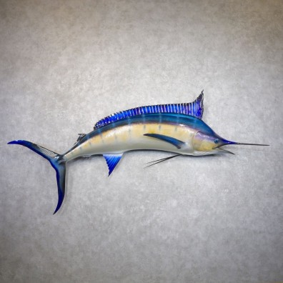 Blue Marlin Fish Mount For Sale #22153 @ The Taxidermy Store