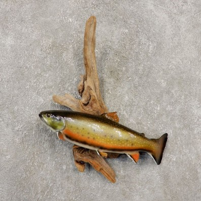 Brook Trout Fish Mount For Sale #20350 @ The Taxidermy Store