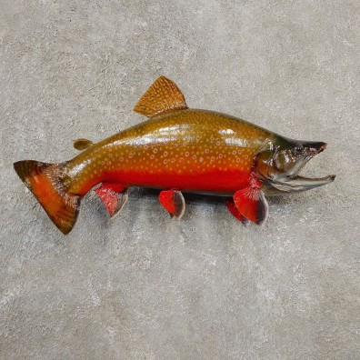 Brook Trout Fish Mount For Sale #20565 @ The Taxidermy Store