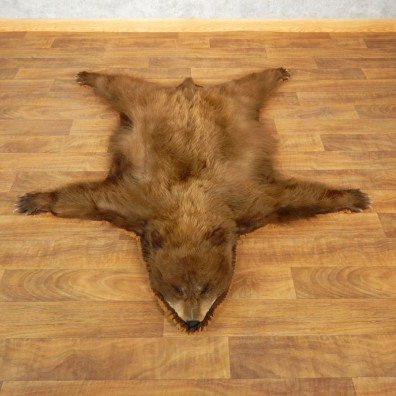 Brown Bear Taxidermy Rug with Mounted Head 17856 For Sale @ The Taxidermy Store