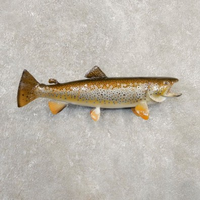 Brown Trout Fish Mount For Sale #20568 @ The Taxidermy Store