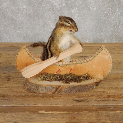 Canoe Chipmunk Novelty Mount For Sale #20124 @ The Taxidermy Store