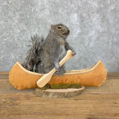Canoe Squirrel Novelty Mount For Sale #23067 @ The Taxidermy Store