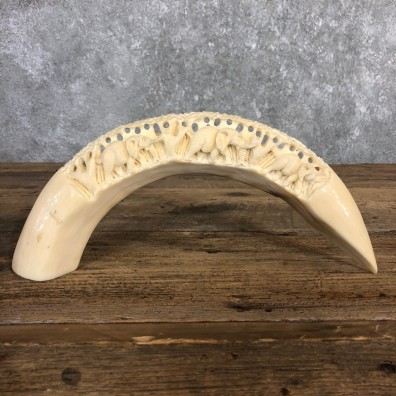 Carved Hippopotamus Tooth For Sale #19957 @ The Taxidermy Store