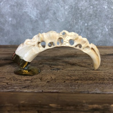Carved Warthog Tooth For Sale #19959 @ The Taxidermy Store