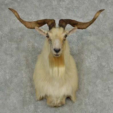 White Catalina Goat Mount For Sale #13947 - The Taxidermy ...