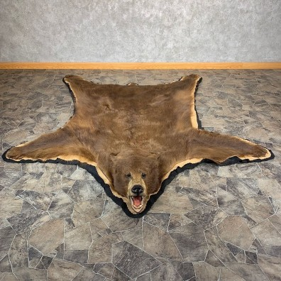 Cinnamon Black Bear Full-Size Rug For Sale #21171 @ The Taxidermy Store