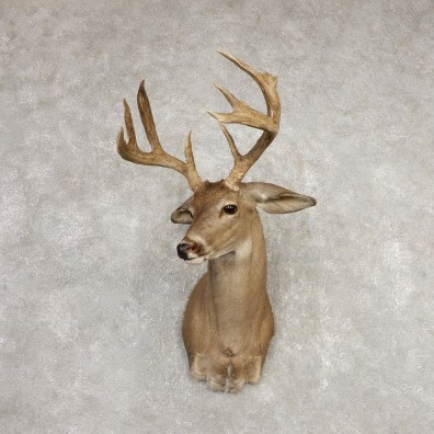 Coues Deer Shoulder Mount For Sale #20368 @ The Taxidermy Store