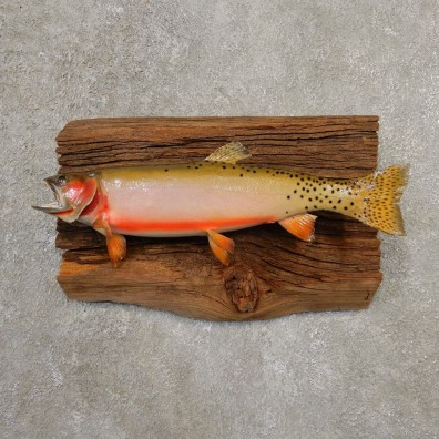 Cutthroat Trout Fish Mount For Sale #20560 @ The Taxidermy Store