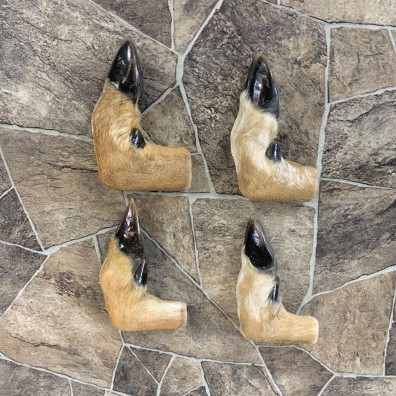 Deer Hoof Craft Pack For Sale #22021 @ The Taxidermy Store
