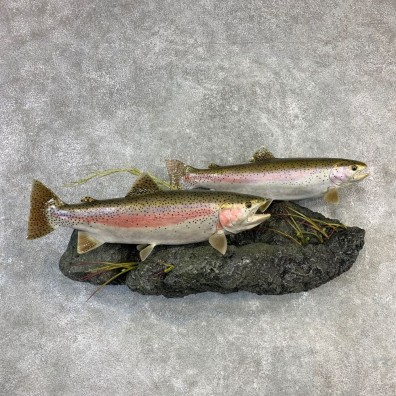 Double Reproduction Rainbow Trout Fish Mount For Sale #21834 @ The Taxidermy Store