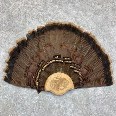 Eastern Wild Turkey Fan For Sale #21749 @ The Taxidermy Store
