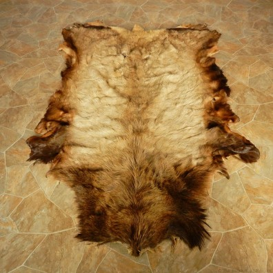 Rocky Mountain Elk Hide Taxidermy #13013 For Sale @ The Taxidermy Store