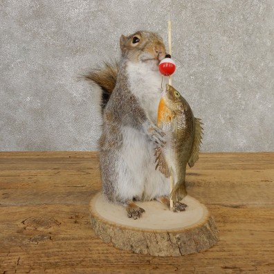 Fishing Squirrel Novelty Mount For Sale #20745 @ The Taxidermy Store