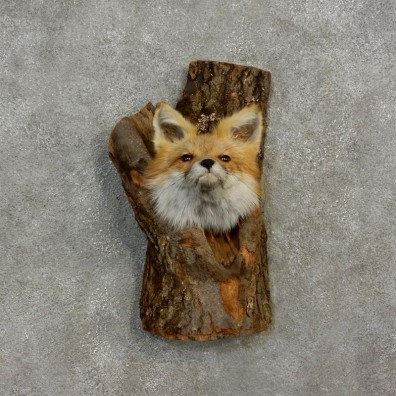 Red Fox in a Log Head Mount For Sale #17180 @ The Taxidermy Store