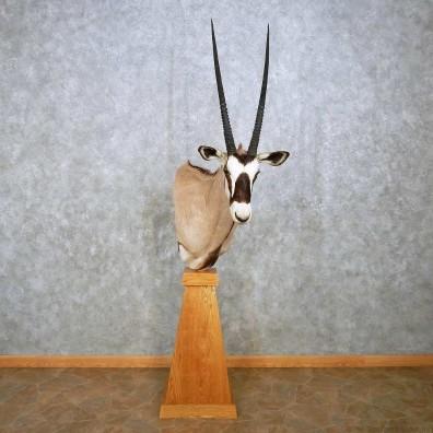 African Gemsbok Pedestal Mount For Sale #14391 @ The Taxidermy Store