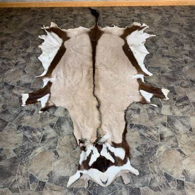 Gemsbok Hide For Sale #21856 @ The Taxidermy Store
