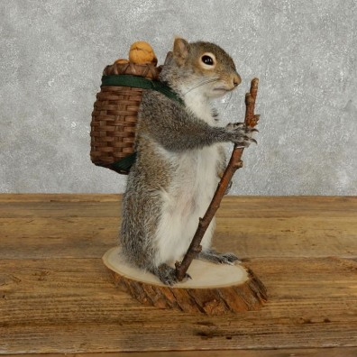 Hiking Squirrel Novelty Mount For Sale #17722 @ The Taxidermy Store