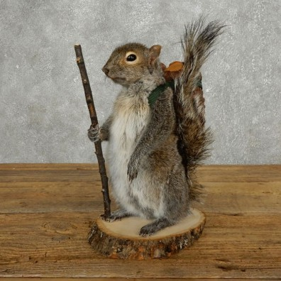 Hiking Squirrel Novelty Mount For Sale #17724 @ The Taxidermy Store