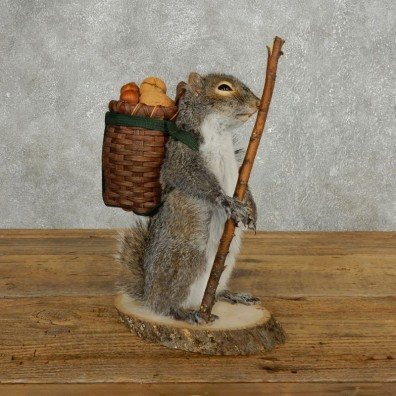 Hiking Squirrel Novelty Mount For Sale #17725 @ The Taxidermy Store