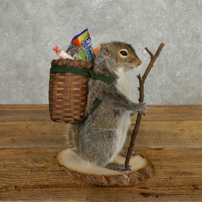 Hiking Squirrel Novelty Mount For Sale #17726 @ The Taxidermy Store