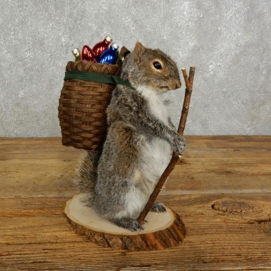 Hiking Squirrel Novelty Mount For Sale #17729 @ The Taxidermy Store