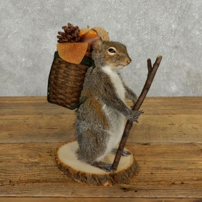 Hiking Squirrel Novelty Mount For Sale #17731 @ The Taxidermy Store