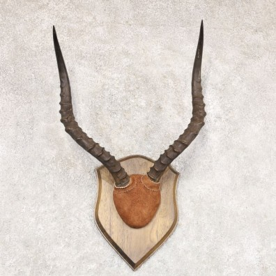 Impala Plaque Mount For Sale #22360 @ The Taxidermy Store
