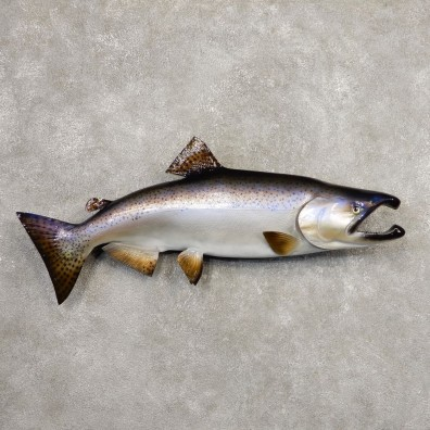 King Salmon Fish Mount For Sale #20342 @ The Taxidermy Store