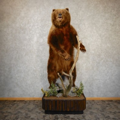 Alaskan Brown Bear Life Size Taxidermy Mount For Sale #20354 @ The Taxidermy Store