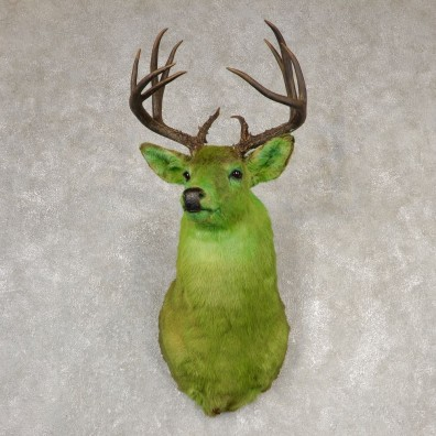 Legendermy Green Whitetail Deer Shoulder Mount For Sale #20517@ The Taxidermy Store