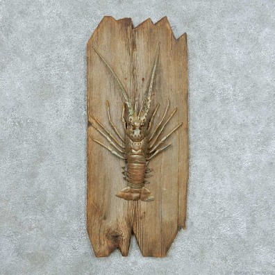 Spiny Lobster Life-Size Mount #13655 For Sale @ The Taxidermy Store