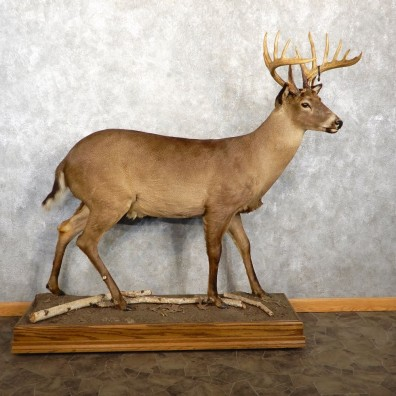 Melanistic Whitetail Deer Life-Size Mount For Sale #18762 @ The Taxidermy Store
